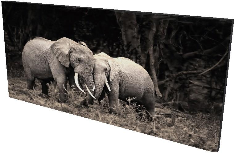 Animales 106