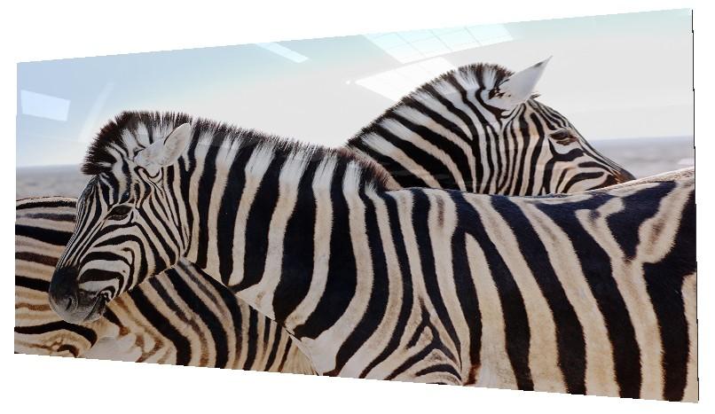 ANIMALES 110